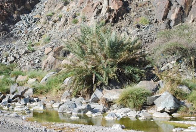 Oman 2013 (1)