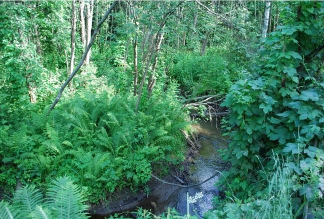 djungel 2